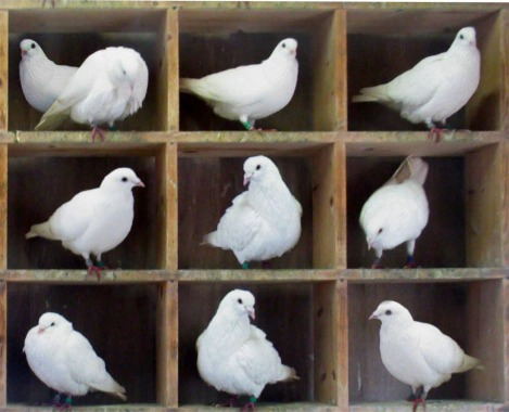 An image of pigeons in holes. Here there are n = 10 pigeons in m = 9 holes. Since 10 is greater than 9, the pigeonhole principle says that at least one hole has more than one pigeon. (Credit: SA 3.0, McKay)