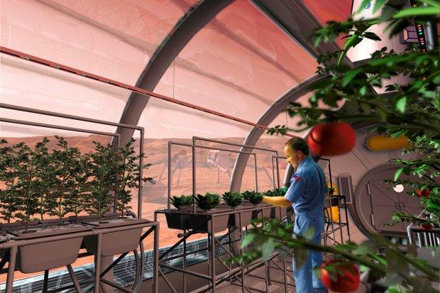 A NASA rendering of farming in Martian greenhouses.