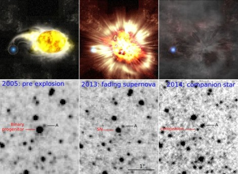 The above sequence depicts a rare supernova explosion. Hubble images (bottom panel) correspond to an artist's conception (top panel). (Credit: Kavli IPMU / NASA / Gastón Folatelli)