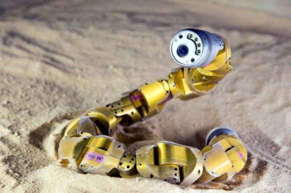 Researchers on Thursday said they conducted experiments to learn precisely how sidewinder rattlesnakes are able to climb sandy hills, then applied the reptiles' repertoire to an existing snake robot so it could do the same thing. Credit:  Chaohui Gong., Reuters/Chaohui Gong/Handout via Reuters)