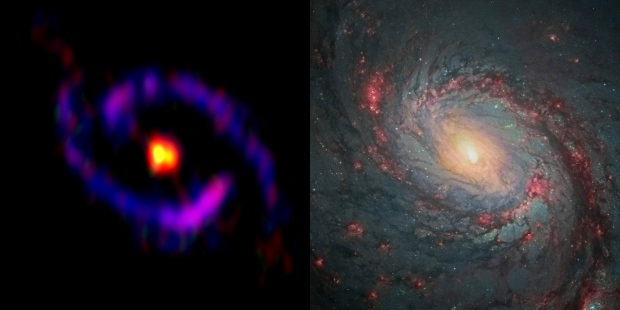 The central part of the galaxy M77, also known as NGC 1068, observed by ALMA and the NASA/ESA Hubble Space Telescope. Yellow: cyanoacetylene (HC3N), Red: carbon monosulfide (CS), Blue: carbon monoxide (CO), which are observed with ALMA. While HC3N is abundant in the central part of the galaxy (CND), CO is mainly distributed in the starburst ring. CS is distributed both in the CND and the starburst ring. Credit: ALMA(ESO/NAOJ/NRAO), S. Takano et al., NASA/ESA Hubble Space Telescope